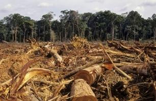La deforestación del Amazonas creció un 29% en 2013 306_PGYC_fghfghfgfsdf