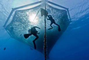 ¿Es posible una acuicultura sostenible?
