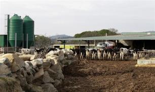 Monstruoso proyecto para una granja de 20.000 vacas en Soria