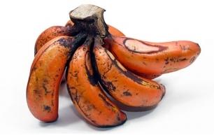Producción sustentable de plátano macho en Colima
