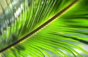 Plan de acción de Aceite de Palma Sostenible