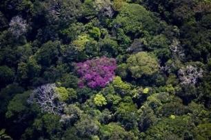 'Moratoria de la Soja' 1 – Deforestación 0