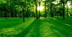 Honduras. Restaurarán 35 mil hectáreas de bosques en 5 años