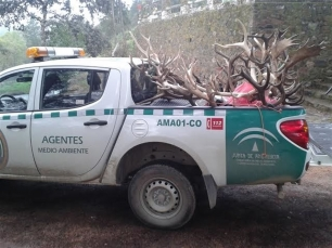 Incautan en Pozoblanco 20 trofeos de caza furtiva