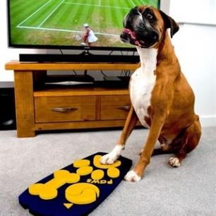 ¿Qué le gusta a los perros ver en el televisor?
