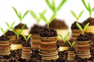 Innovadoras herramientas bancarias sostenibles para detener la deforestación