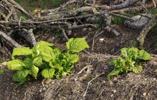Compromís propone turnos de riego para que cultivos ecológicos no estén