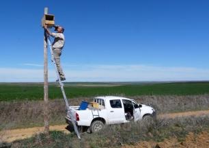 Implementan 2.000 nidales en Castilla y León para aves rapaces que cazan topillos