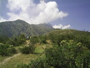 Navarra genera 500.000 m3 en madera y leña apta para la biomasa