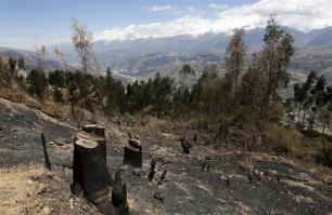 La cocaína NO es la culpable de la deforestación en el Amazonas