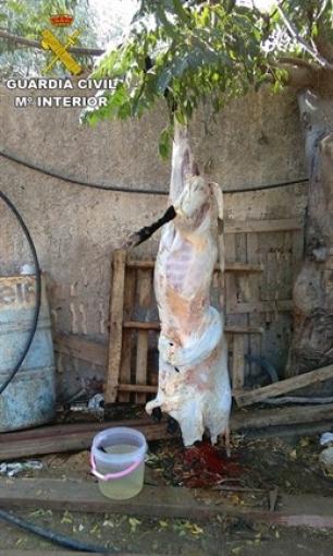 La Benemérita ha desmantelado en Alicante un matadero clandestino 'vomitivo' situado junto a animales vivos