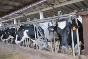 España debe alejarse de la ganadería industrial, en especial de pollos y cerdos