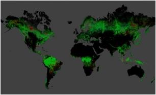 Bosques del mundo amenazados por el aceite de palma