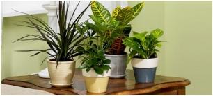 Plantas de interior - Plantas de interior purificadoras del aire del hogar ...