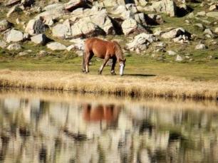Domesticar al caballo tuvo su precio genético
