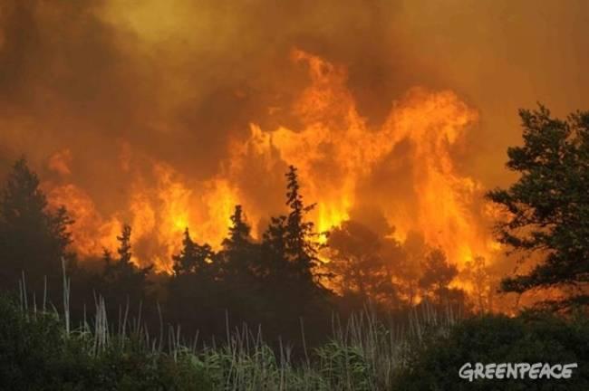 Incendios forestales, conoce su funcionamiento para prevenir antes de que sucedan