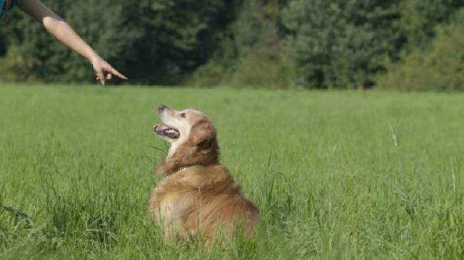 Virtuosos genéticos dirigen la orquesta de la domesticación animal