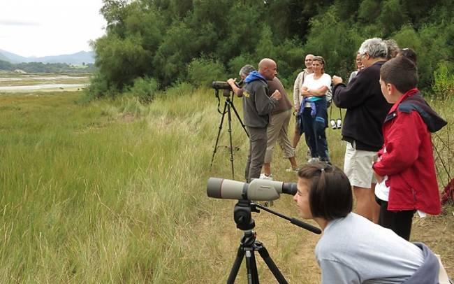 El Urdaibai Bird Center retoma sus salidas para observar águilas pescadoras