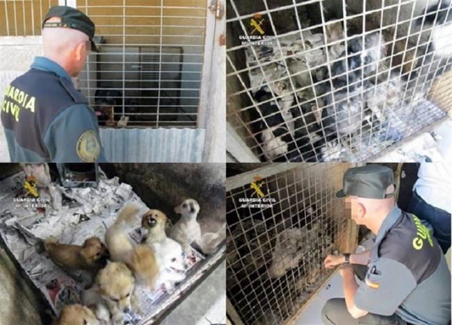 El PSOE promete una ley estatal que regule el bienestar y los derechos de los animales como