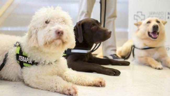 Laboratorios LETI dona al CTAC su vacuna contra la leishmaniosis LetiFend para sus perros de terapia