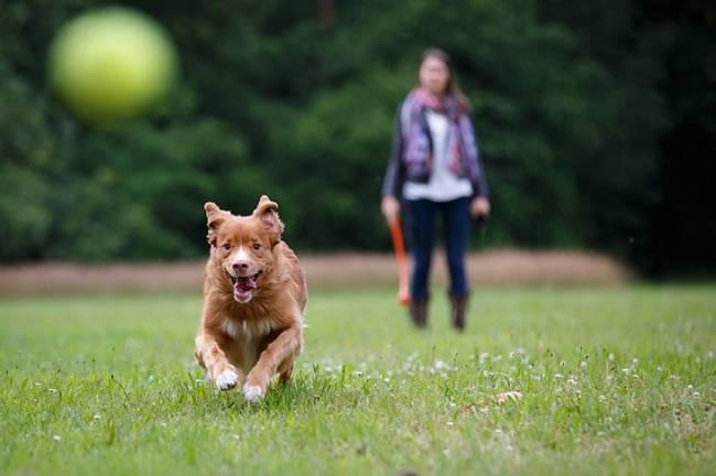 Todo lo que debes saber si tienes un perro en la ciudad
