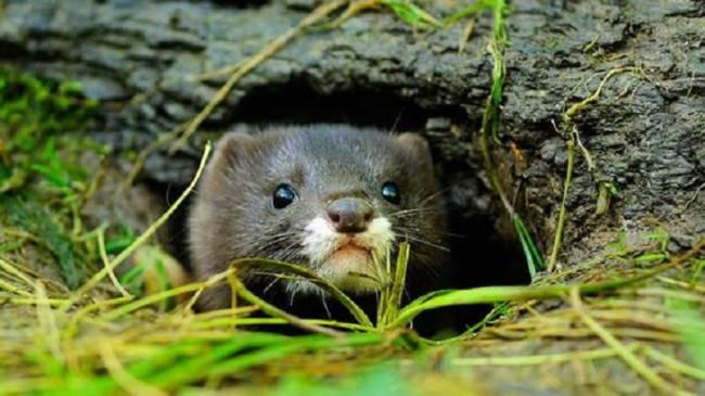 Más de 600 especies animales en peligro de extinción y que no se había detectado su retroceso exponencial