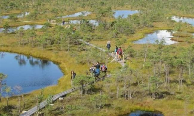 El ciclo de carbono en la tundra recalentada evoluciona al del bosque