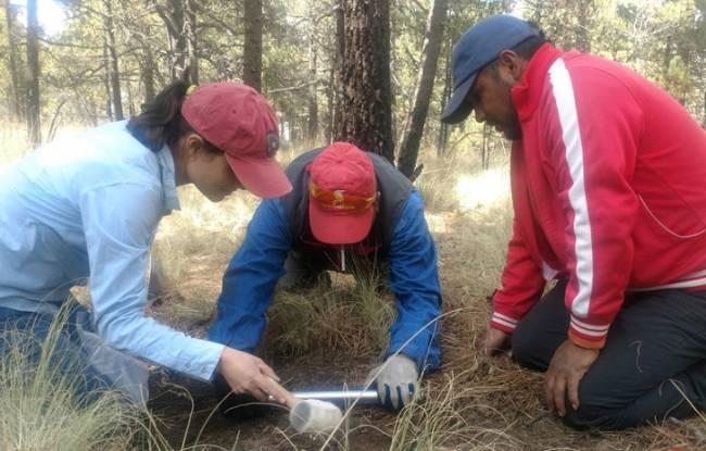 ¿Cuánto carbono existe en suelos mexicanos?