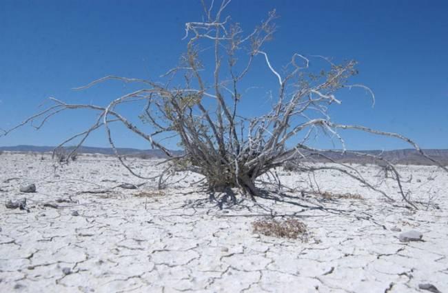 Cambio climático, escasez de agua y buenas cosechas: el Valle de Guadalupe en la mira