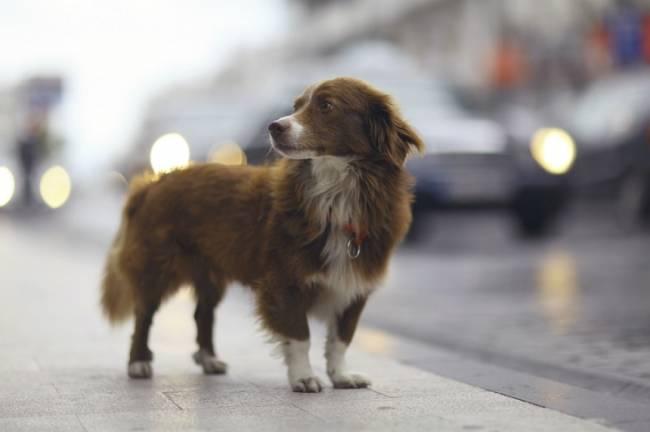 Madrid. Ciudadanos propone una red coordinada entre municipios que mejore la recogida de animales abandonados