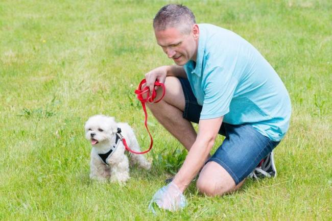 Un curso concienciará en colegios de Granada sobre la importancia de recoger los excrementos de los perros en la calle