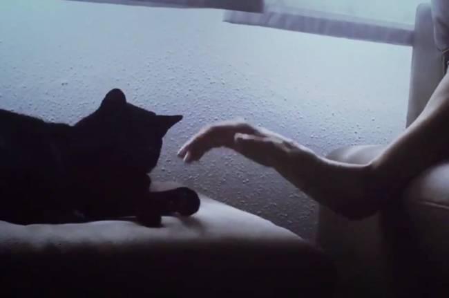 Un gato se queda quieto para que su dueña con Párkinson pueda acariciarle