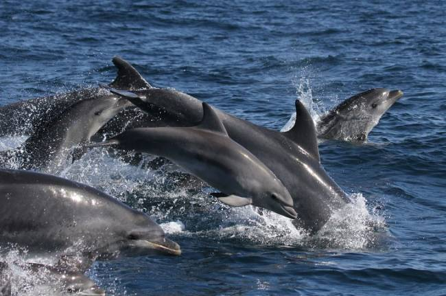 Conservación, Información y Estudio sobre Cetáceos (Circe) inicia una campaña de voluntariado y sensibilización ambiental en Andalucía, Ceuta y Melilla