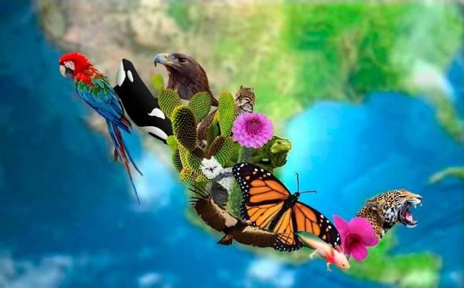 EQUO critica duramente la modificación de la Ley de Biodiversidad