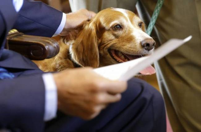 Parlamentarios premian un centro ecuatoriano para el estudio antrozoológico de animales y humanos