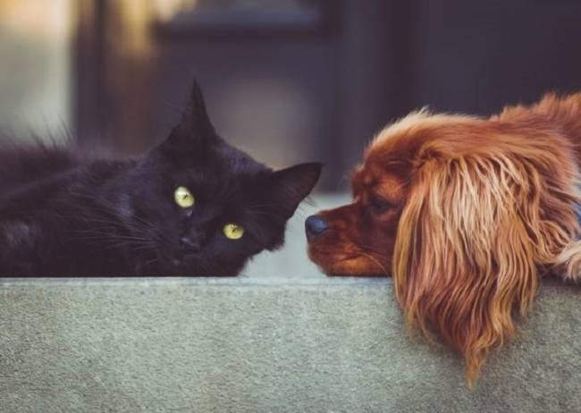 La identificación de los animales de compañía como garantía para una tenencia responsable
