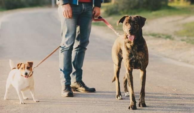 Málaga recuerda por carta a dueños de perros la obligación de identificar el ADN de sus mascotas