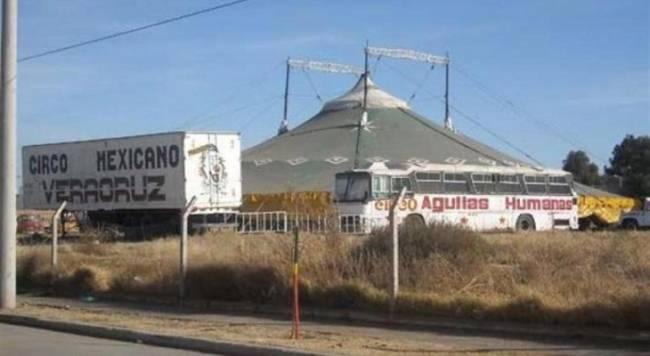 Argentina: Por primera vez el dueño de un circo que maltrató a tigres irá a juicio