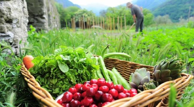 Agricultura ecológica, todo son ventajas