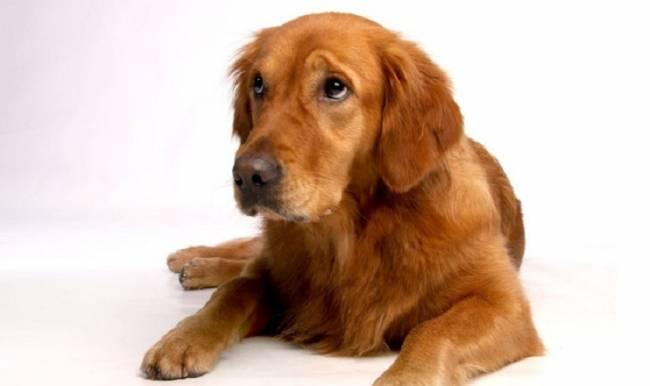 El secreto mejor guardado de los 'ojitos' de tu perro