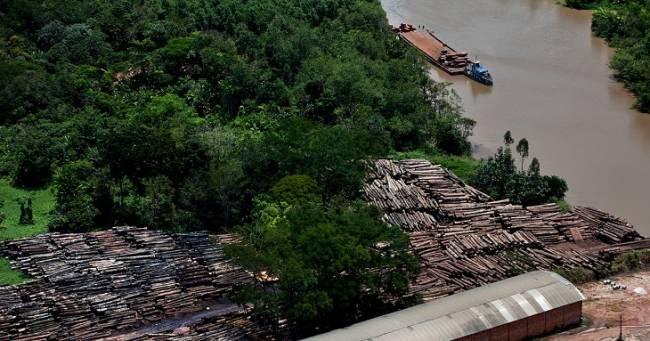 La madera de ipé liquida la Amazonia
