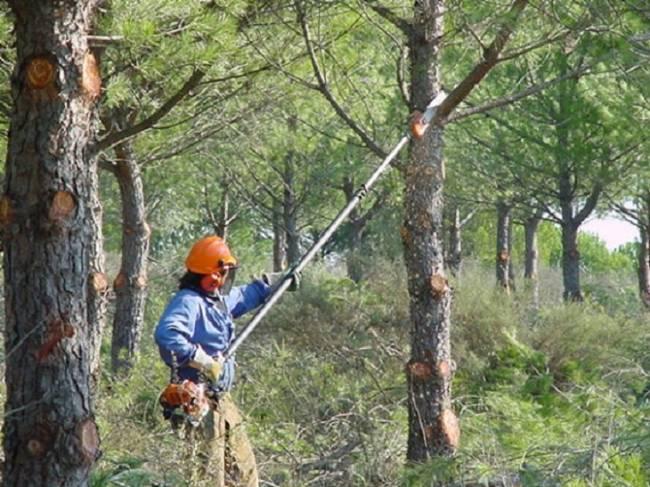 Realizan actuaciones selvícolas contra incendios forestales en las Sierras de Tejeda, Almijara y Alhama