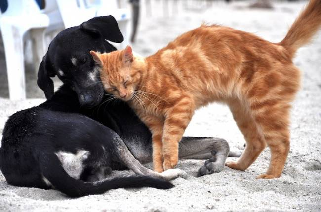 Cerca de 140.000 perros y gatos fueron acogidos en refugios y protectoras españolas durante 2018