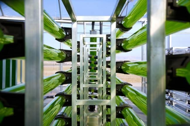 Una jornada en CENER muestra un nuevo modelo de industria vinculado a las microalgas para obtener biodiesel