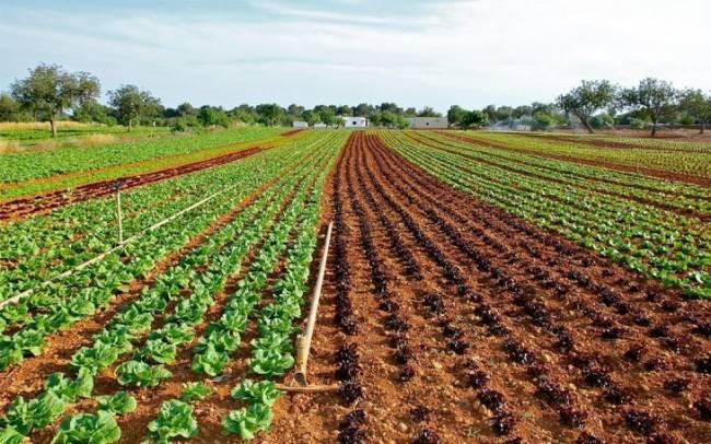 Cáritas forma a más de 150 desempleados en cultivo ecológico en terrenos de la Vega y la Costa de Granada