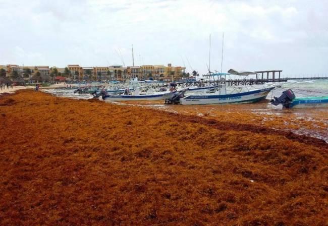 Marea de sargazo en el Caribe Mexicano: realidades, mitos y oportunidades