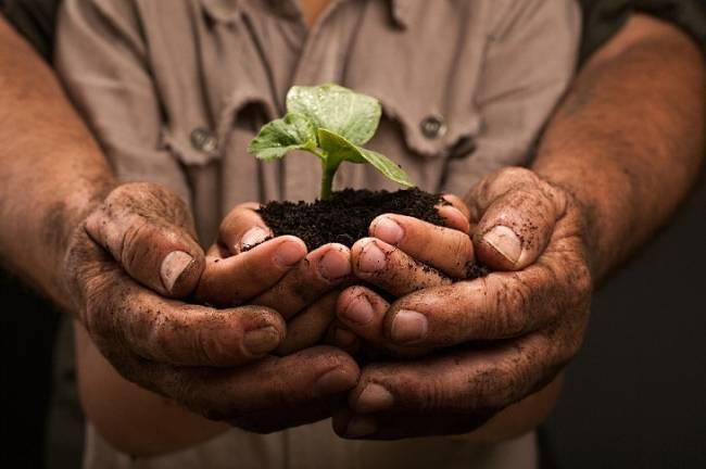 Agroecología, la alimentación sostenible que ha venido para quedarse