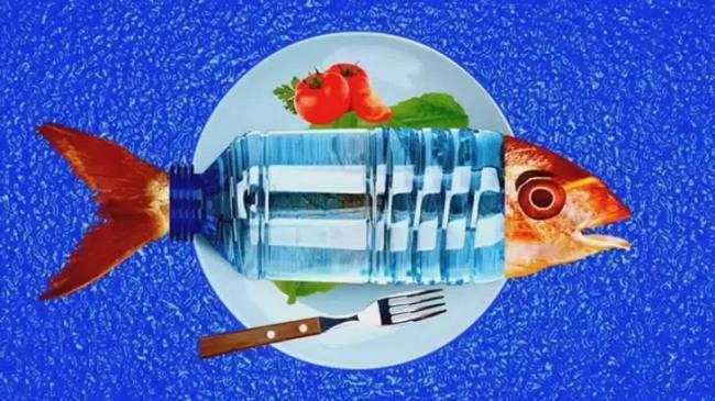 Los peces del Atlántico Noroeste están atiborrados de plástico
