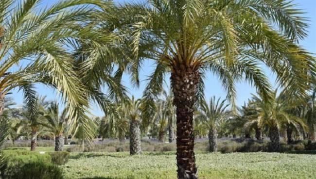 Tecnología verde para convertir los residuos de las palmeras en materiales de construcción