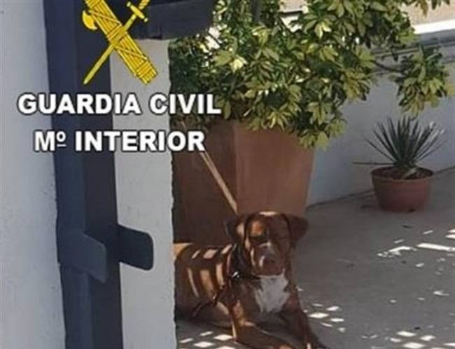Investigadas dos personas por abandonar a un perro atado sin agua ni comida a los 20 días de adoptarlo
